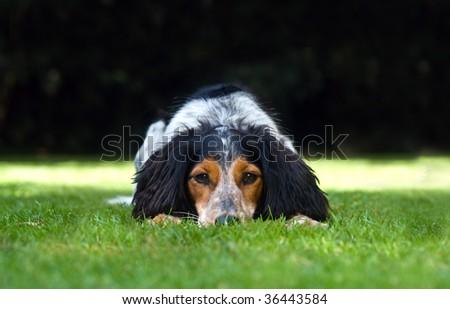 Cute dog enjoying the outside - stock photo