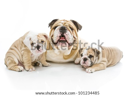Cute dog family playing isolated - stock photo