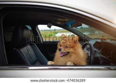 Cute dog in car.
