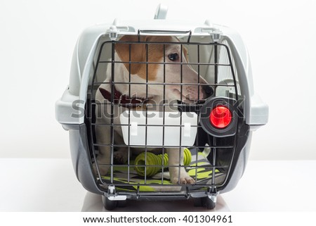 Cute dog in carrier - stock photo