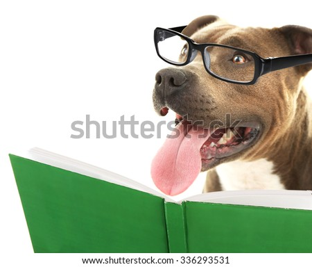 Cute dog in eyeglasses with book isolated on white - stock photo