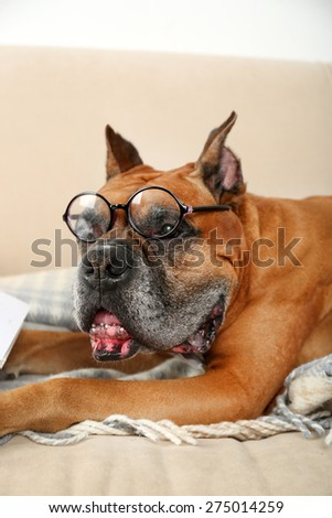 Cute dog in funny glasses sitting on sofa, on home interior background - stock photo