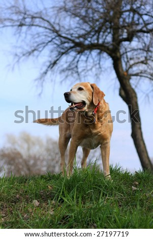 Cute dog in the park - stock photo