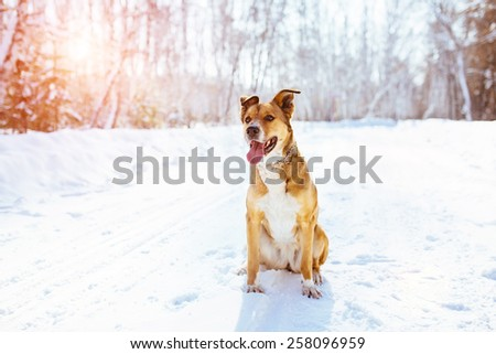 Cute dog in winter. Sitting on the snow in a park.   - stock photo