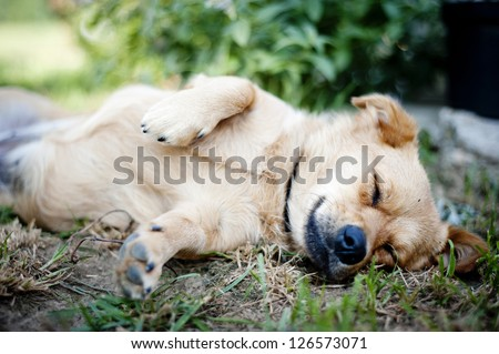 Cute dog is outside in the garden. - stock photo