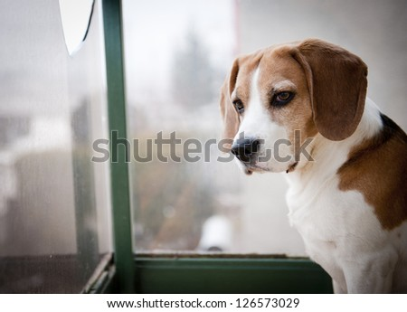 Cute dog is playing outside
