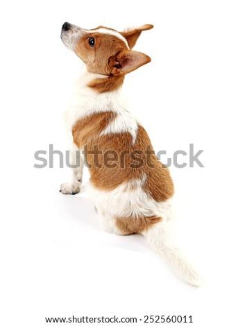 Cute dog isolated on white background - stock photo