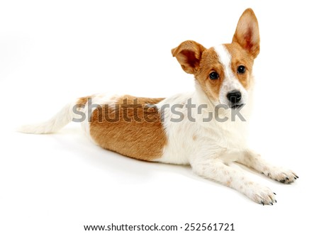 Cute dog isolated on white background - stock photo