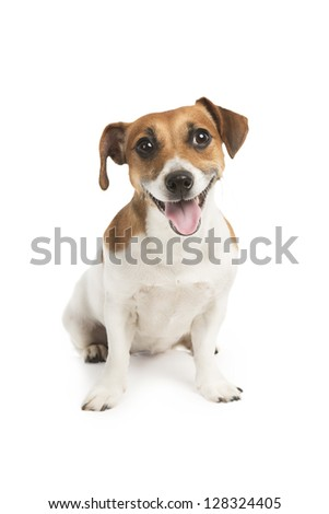Cute dog looking at the camera with a smile, his tongue. Smiling puppy. - stock photo