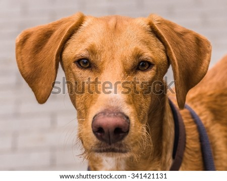 cute dog looking in the camera