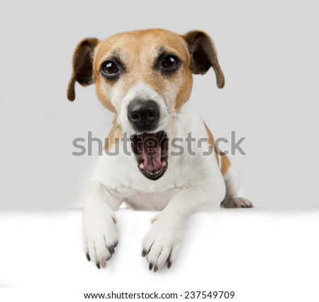 Cute dog lying on the poster. Opened mouth.  Greeting. Free space for your text