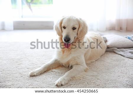 Cute dog on carpet - stock photo