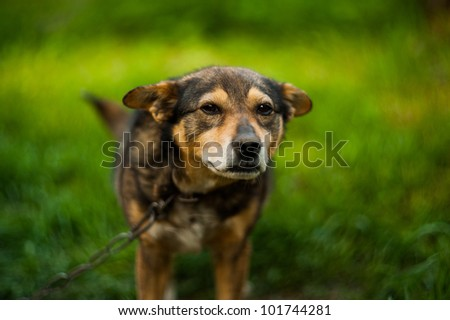 cute dog on grass - stock photo