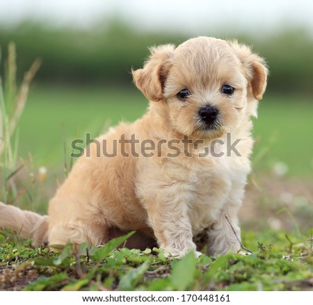 cute dog on nature background