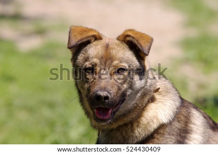 cute dog portrait in focus