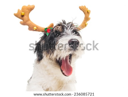 Cute dog posing as a reindeer, isolated on white - stock photo