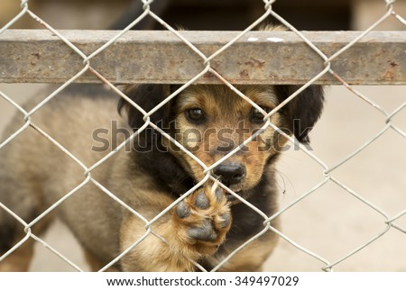 Cute dog puppy giving paw - stock photo