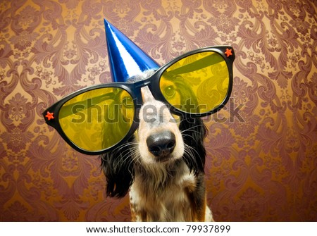 Cute dog ready for a funky party - stock photo