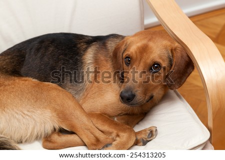 Cute dog resting on the sofa - stock photo