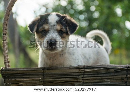 cute dog , sad dog alone ,puppy in morning,pet