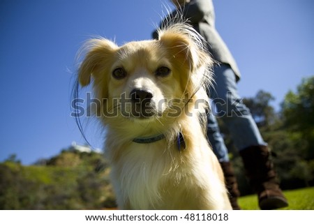 Cute dog showing attitude in park - stock photo