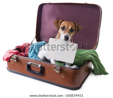 Cute dog sits in a suitcase for traveling with brightly colored things inside of it with a tablet on his chest where you can place your text. Take me with you on vacation. White background