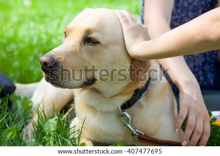 Cute dog sitting new his owner in the park in summer. People petting an adorable dog. - stock photo