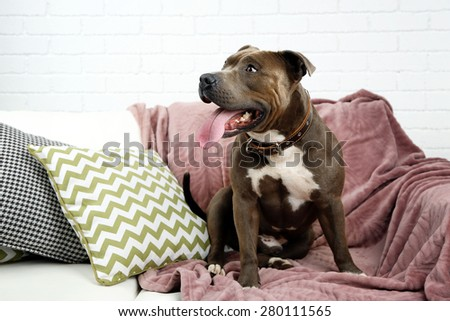 Cute dog sitting on sofa, on home interior background - stock photo