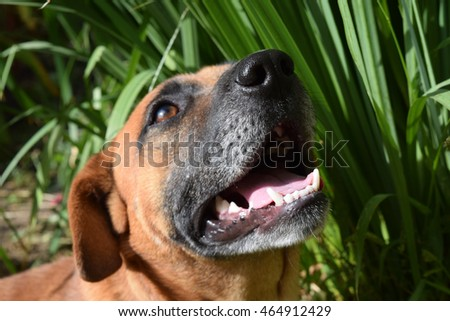 cute dog smiling in the summer on the nature