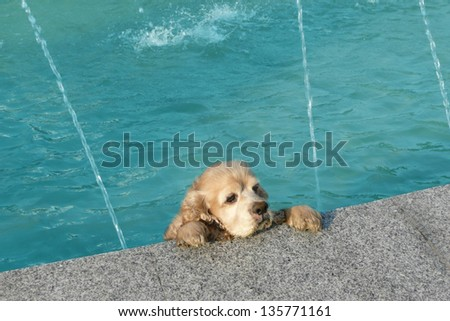 cute dog trying to get out of a swimming pool - stock photo