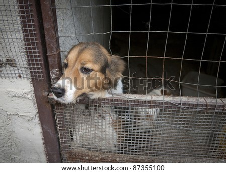 Cute dog under lock and key looking out into the freedom -  region of Campania Italy.
