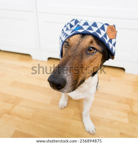 Cute dog wearing hat