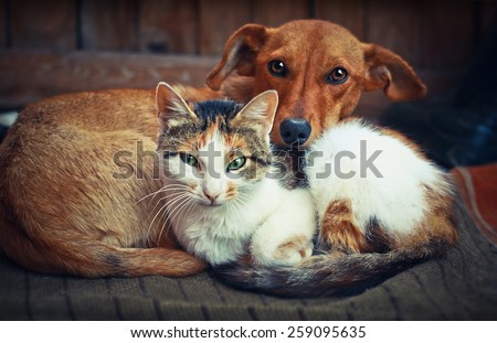 Cute dog with cat. Love - stock photo