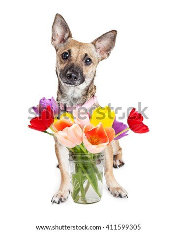 Cute dog with glass jar filled with colorful tulips