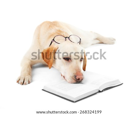 Cute dog with glasses and book isolated on white background - stock photo