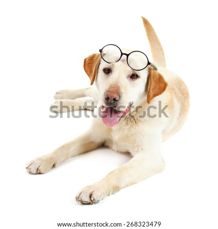 Cute dog with glasses isolated on white background - stock photo