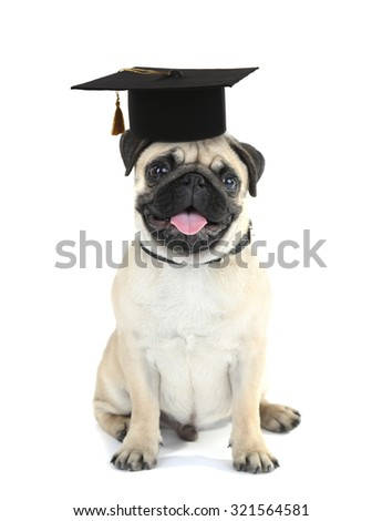 Cute dog  with grad hat isolated on white - education concept - stock photo