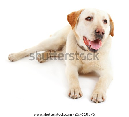 Cute dog with leash isolated on white background - stock photo