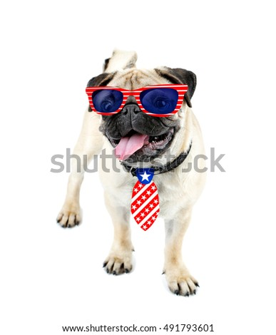 Cute dog with sunglasses and tie on white background. USA holiday concept.