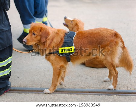 Cute dog working for fire brigade - stock photo