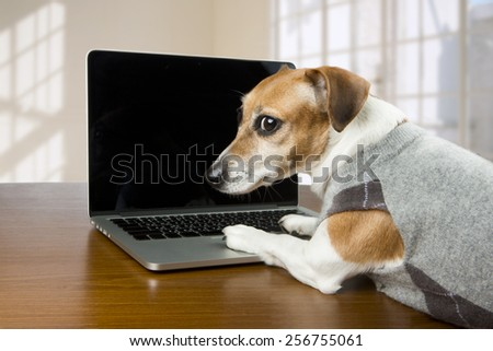 Cute dog works in the office at the computer. Licked. Black background you can place your text - stock photo