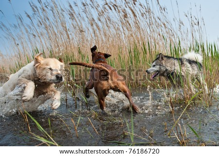 Cute dogs having fun in the water - stock photo