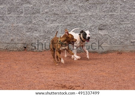 Cute dogs playing
