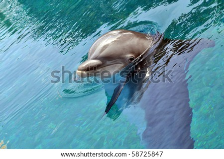 Cute dolphin - stock photo