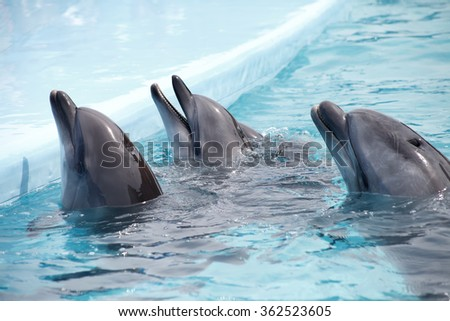 cute dolphins - stock photo