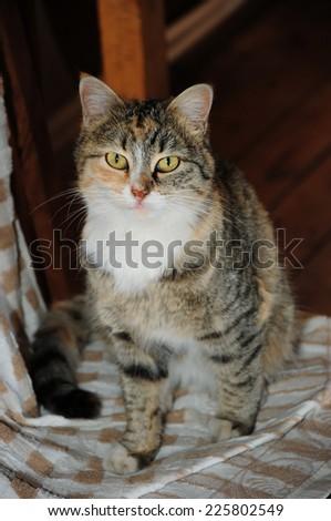Cute domestic cat - stock photo