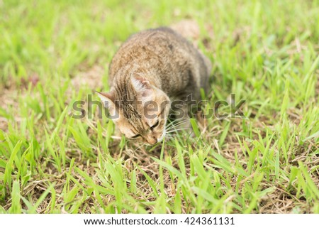 cute domestic cat eat grass in the outdoor - stock photo