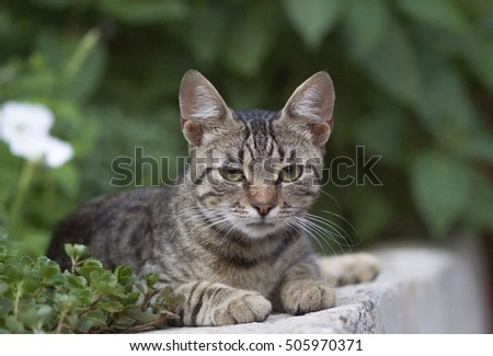 Cute domestic cat portrait outdoors looking in camera