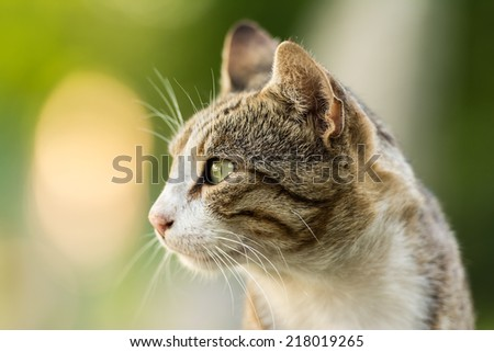 Cute Domestic Cat Profile Portrait - stock photo