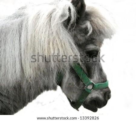 cute donkey with white background - stock photo